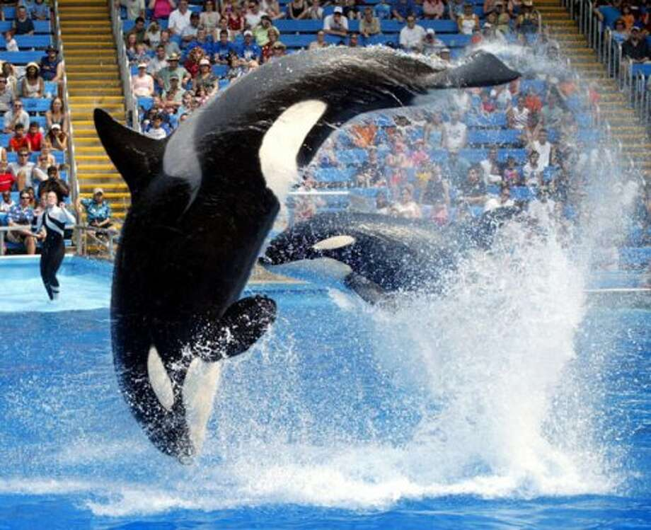SeaWorld Adventure Park in San Antonio. (ERICH SCHLEGEL / KRT)