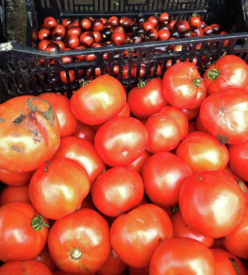 Extra tomatoes from the season's harvest can be used in sauce, grilled cheese sandwiches and salads. Photo: Patti Woods / Fairfield Citizen contributed