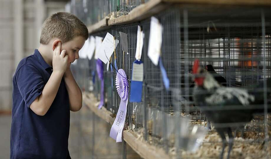 We don't want your #%@#*@%& sins!Hayden Hooper plugs his ears against raucous clucking and crowing as he approaches the chicken and rooster cages at the