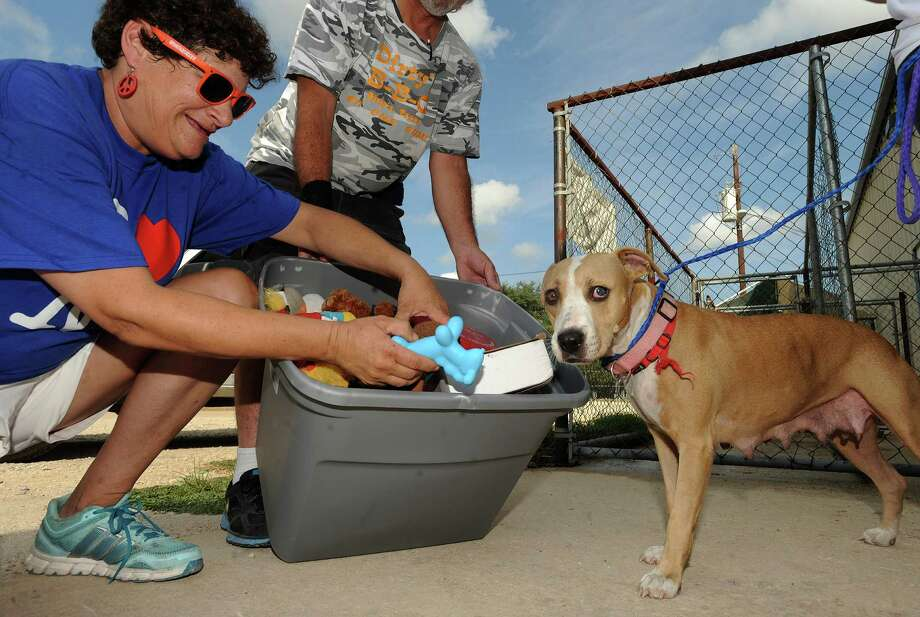 Lisa Morris, left, gives a donated toy to a dog at the Canyon Lake Animal Shelter on Saturday, Sept. 6, 2013. Members of The Be Nice Club and the Be Nice Express delivered donated supplies. Morris founded the groups. Photo: San Antonio Express-News / San Antonio Express-News