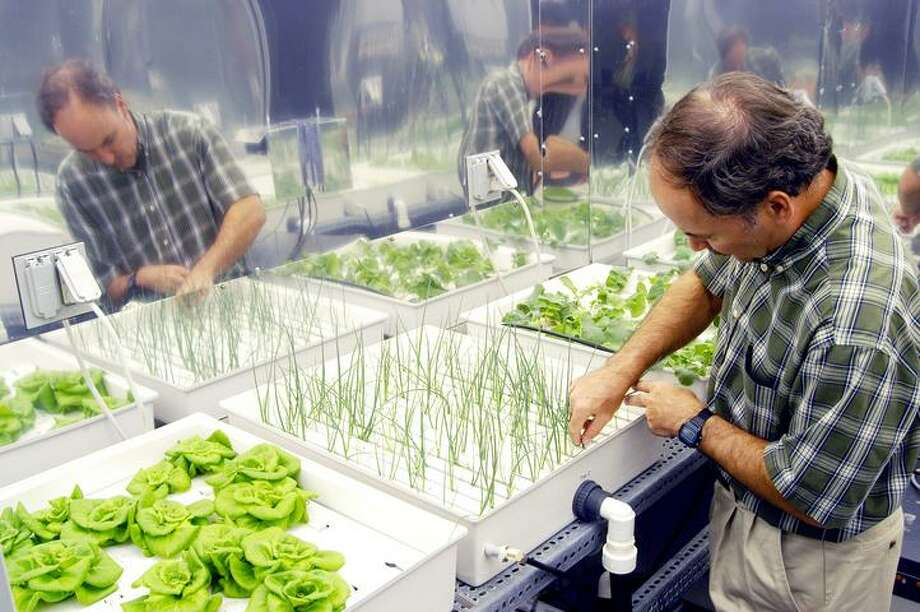 In a plant growth chamber in the KSC Space Life Sciences Lab, plant physiologist Ray Wheeler checks onions being grown using hydroponic techniques. The other plants are Bibb lettuce (left) and radishes (right). Wheeler and other colleagues are researching plant growth under different types of light, different CO2 concentrations and temperatures. The Lab is exploring various aspects of a bioregenerative life support system. Such research and technology development will be crucial to long-term habitation of space by humans. Photo: NASA