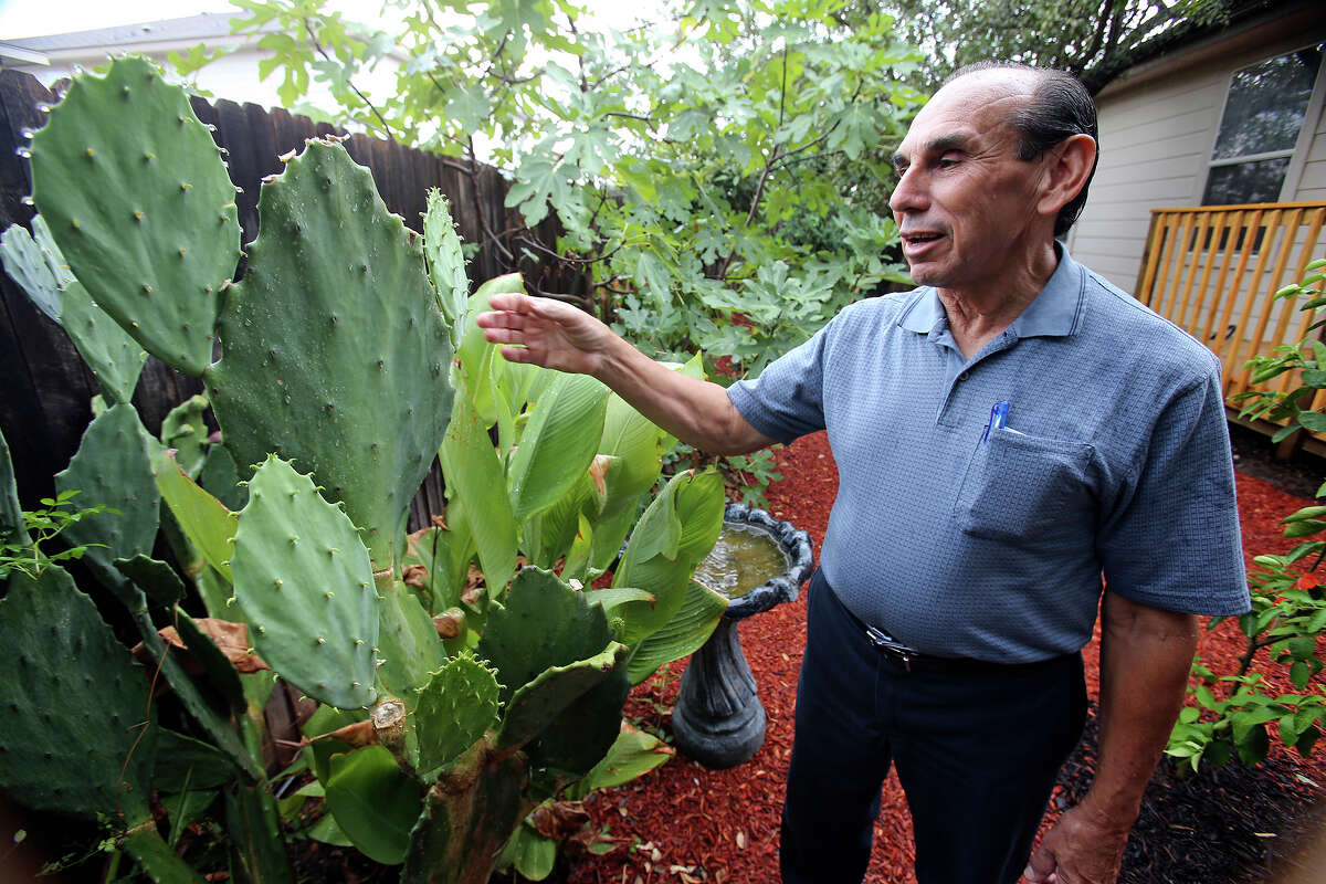Humberto G. Guerra checks a spineless prickly pear growing in his backyard near a garden he planted using a SAWS landscape coupon.