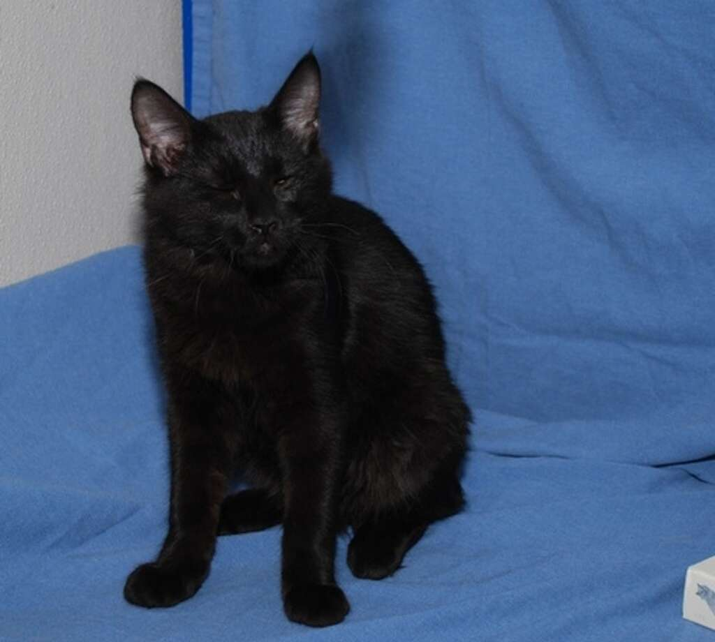 No black cat adoptions in October but they re on sale in Sugar