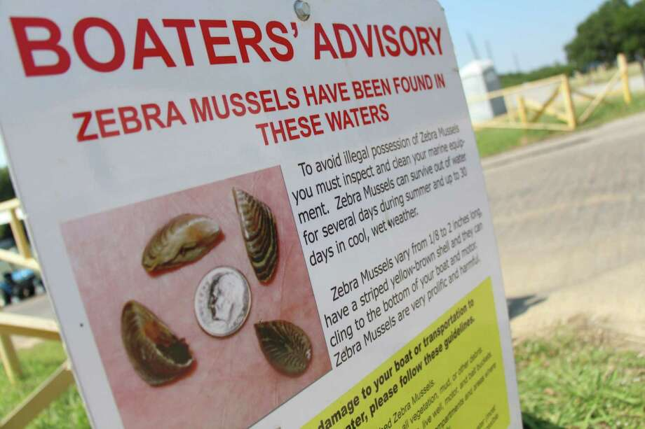 Boaters around Lewisville Lake, near Dallas, are alerted to the zebra mussel problem. Photo: Uriel Garcia, STF / AP