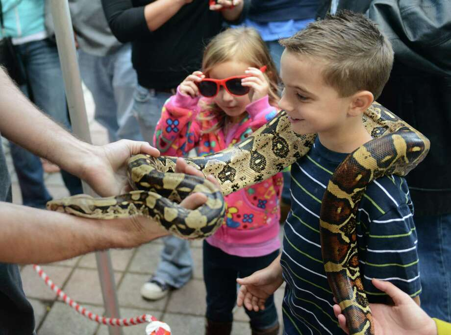 Jack Reda, 7, of Danbury, wears a snake from Curious Creatures around his neck as his sister, Emma Reda, 4, watches at Taste of Danbury at CityCenter Green in Danbury, Conn. on Saturday, Sept. 14, 2013.  The event featured many local food vendors and cooking demonstrations, along with various activities for families and children. Photo: Tyler Sizemore / The News-Times