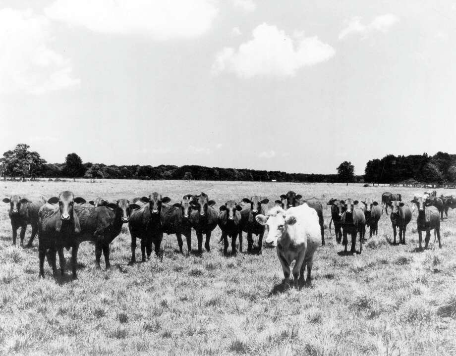 Jan. 1962  - A ground level view of the Manned Spacecraft Center site prior to ground breaking and the beginning of construction. Cows once grazed where MSC (Johnson Space Center) now stands. Photo: NASA / handout