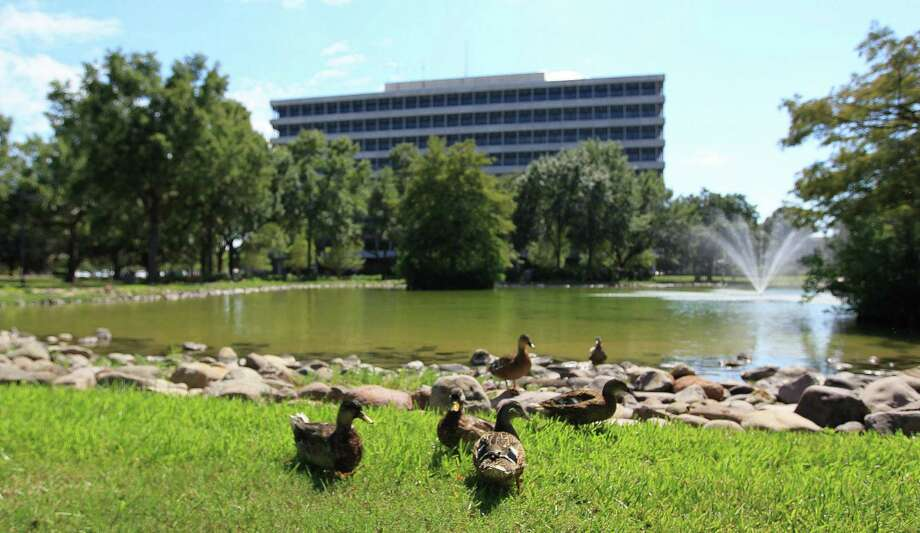 Ducks walk around a large pond on the campus of Johnson Space Center, just behind Building 1, which is the Headquarters for JSC, Thursday, Sept. 12, 2013, in Clear Lake. Photo: Karen Warren, Houston Chronicle / © 2013 Houston Chronicle