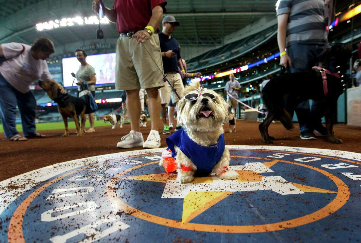 Dee Dee, walked by owner Dan White, sits on the on-deck circle as White's wife, Debra, not pictured, takes a photo during the Pooch Parade as part of Dog Day at Minute Maid Park Sunday, Sept. 15, 2013, in Houston.