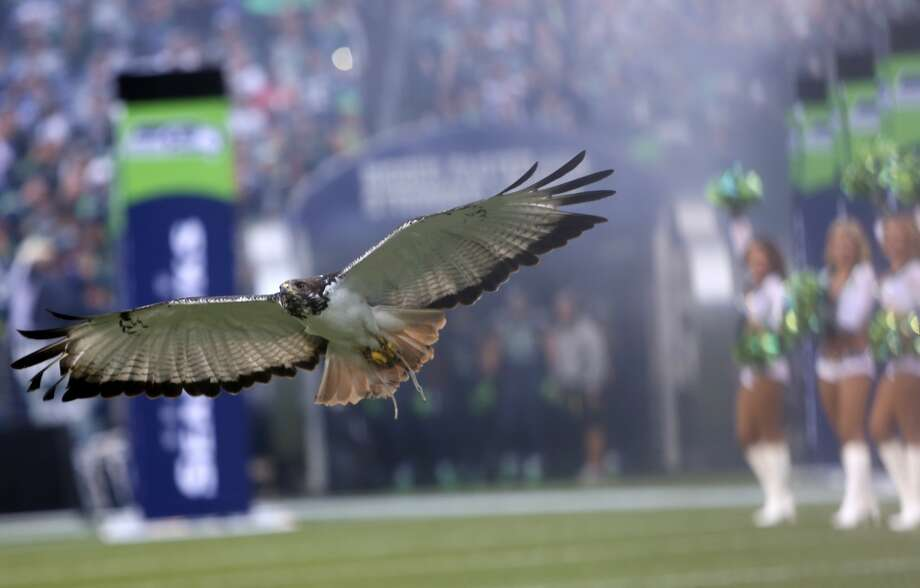 The Seattle Seahawks flies onto the field. Photo: JOSHUA TRUJILLO, SEATTLEPI.COM