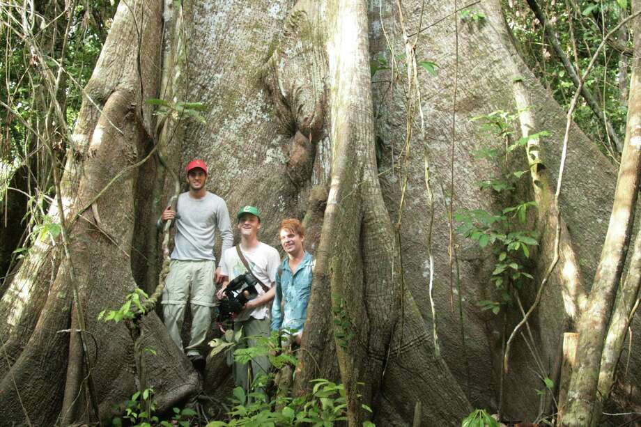 "From left, filmmakers P.J. Hoffman, Christian Chapman and Cody Troyer are dwarfed by the massive trunk of a llupuna tree near the Tapiche River in Peru. The crew of three produced the feature documentary ""La Selva Tranquila,"" which will be screened at the Shermsan Green gazebo on Saturday, Sept. 21 at 8 p.m. Photo: Contributed Photo / Fairfield Citizen"