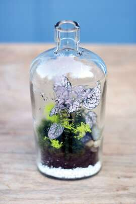 "From ""Terrariums Reimagined,"" by Kat Geiger ($14.95; Ulysses Press). These pub derived vessels are ideal for tropical planting. Opting for a bottle with an opening about 1-inch wide will help prevent too much moisture from escaping the bitty tropical shelter. Shop for plants, soil and pebbles at the gardening supply store. Try harvesting moss from your backyard."