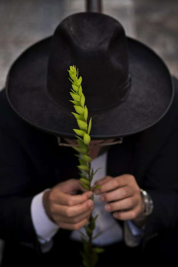 An ultra-Orthodox Jewish man holds a hadas, a myrtle branch that is one of the four items used as a symbol on the Jewish holiday of Sukkot, as he examines it for blemishes to determine if it is ritually acceptable before buying it, in Jerusalem's Mea Shearim neighborhood, Monday, Sept. 16, 2013. The holiday commemorates the Israelites 40 years of wandering in the desert and a decorated hut is erected outside religious households as a sign of temporary shelter. (AP Photo/Bernat Armangue) Photo: Bernat Armangue, Associated Press