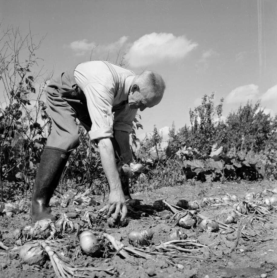 Organic food Photo: Raymond Kleboe, Getty Images