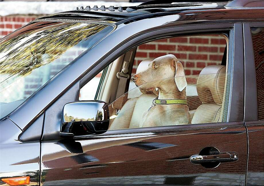 Definition of a good dog:1) Can take over the driving when you're feeling sleepy. 2) Matches the seat 