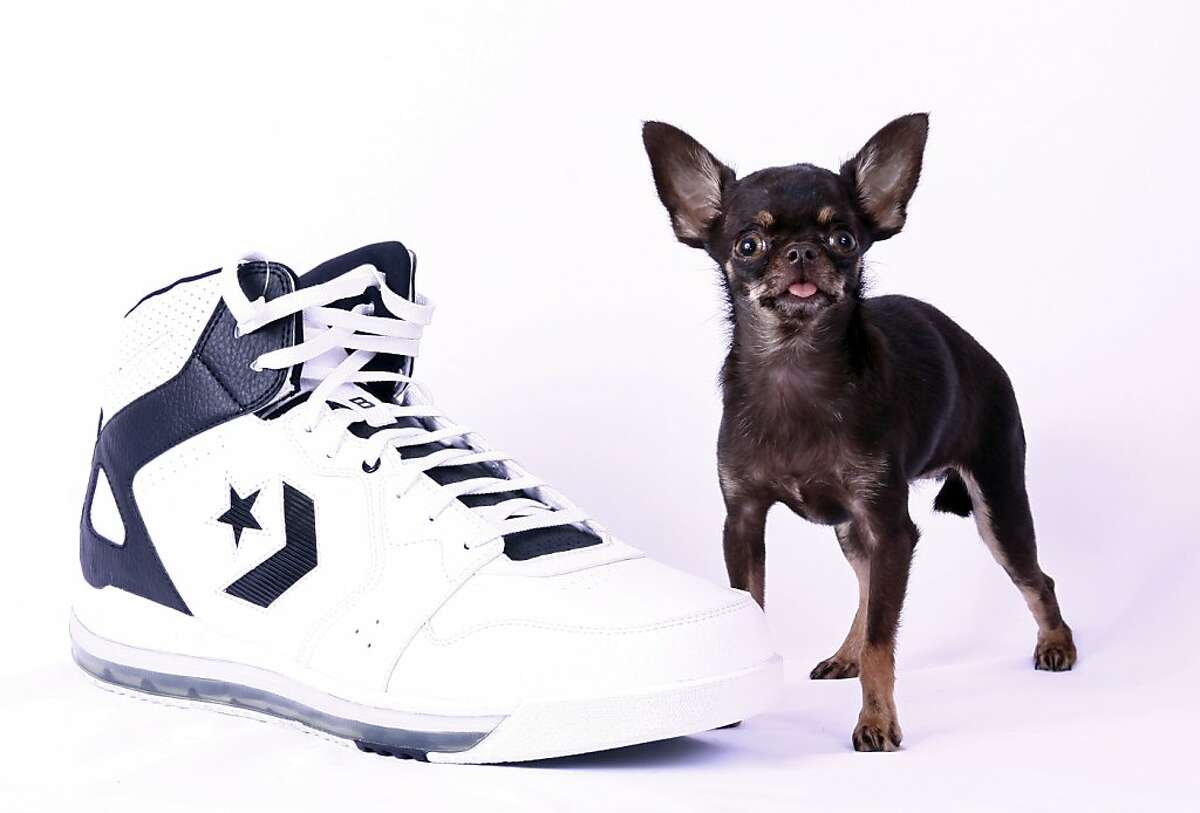 Thank God for small Miracles: At 3.8 inches tall, Miracle Milly the Chihuahua is the smallest dog on earth, according to Guinness World Records. Just don't expect her to fetch your shoes.