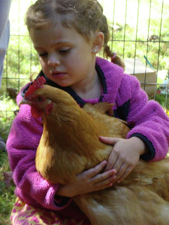 Annabelle King, 4, of Fairfield, holds a chicken at the Greenfield Hill Grange's annual Agricultural Fair on Saturday. Photo: Meg Barone / Fairfield Citizen contributed