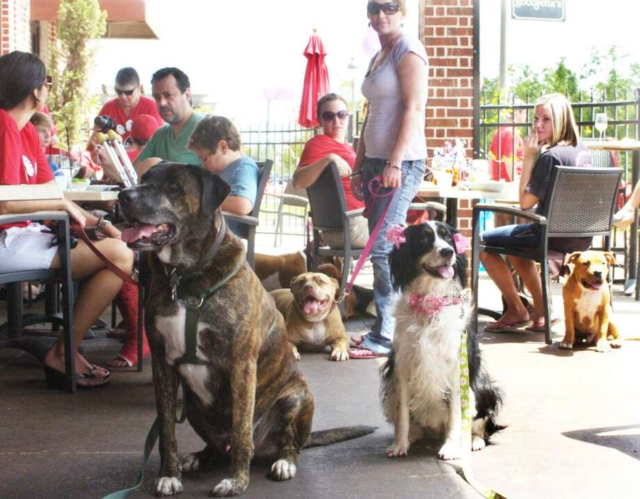 "Cletus, a mixed breed and Kennedy, an English springer spaniel, were joined by friends both human and canine Sunday at Goodfella's, where the American Cancer Society held a kickoff brunch for its annual ""Bark for Life"" fundraiser. Photo: The Beaumont Enterprise"