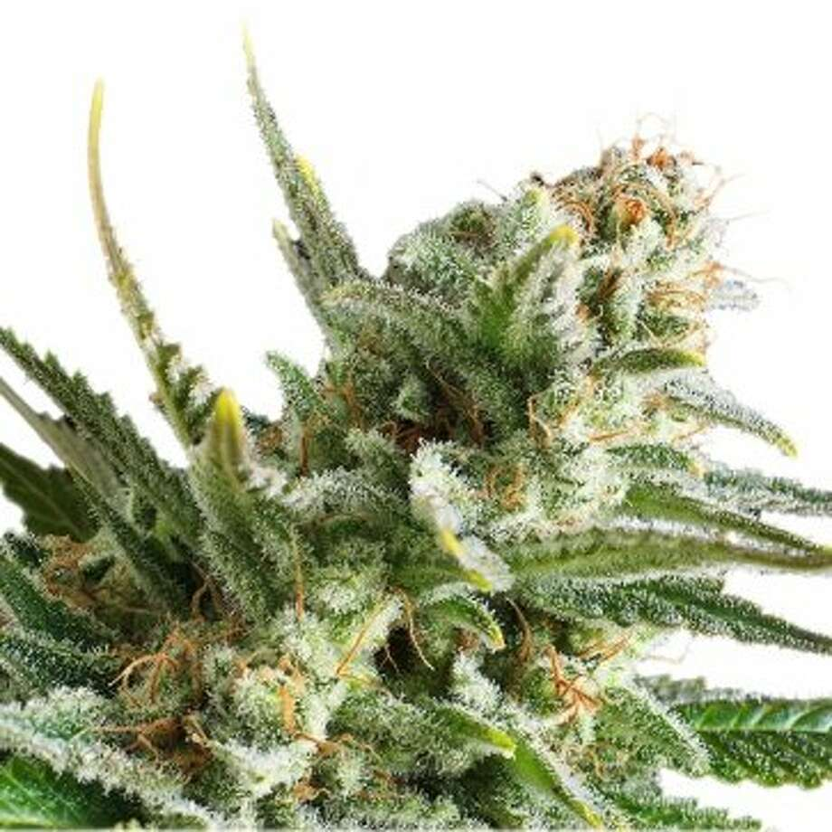 Smell the Truth pot blog from SFGate in San Fran, presents some of the best strains for depression, as reported by patients:  Amnesia Haze: Pot comes in two main varieties -- more sedative indicas, and more energetic sativas. Sativas are broadly recommend for depression symptoms, as they can cause euphoria, though every patient is different. Amnesia Haze is an 80-20 sativa-dominant hybrid that's won 16 Cannabis Cups. It's a mix of sativas from Jamaica, Laos, and Hawaii, with some Afghani. Breeders report a fresh, fruity flavor and head high that can break up negative thought patterns. Photo: Royal Queen Seeds
