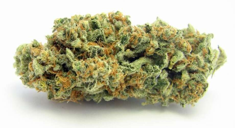Trainwreck: A mythic sativa from Arcata, CA. that's big in Northern California. No one knows what's in it, other than that it's mostly sativa by its look, growth and energetic, euphoric effects. Use it to clean your house.