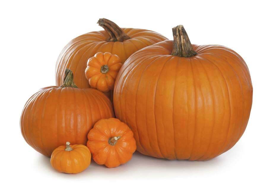 Group of pumpkins isolated on white background/fotolia Photo: Photographer: Elena Schweitzer / Elena Schweitzer - Fotolia