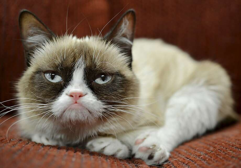 Hasn't improved her mood though: Grumpy Cat, the Internet sensation whose real name is Tardar Sauce, has a endorsement deal. She's now the spokescat for a Friskies brand cat food. (Nestle Purina, St. Louis.) Photo: Nestle Purina PetCare, Associated Press