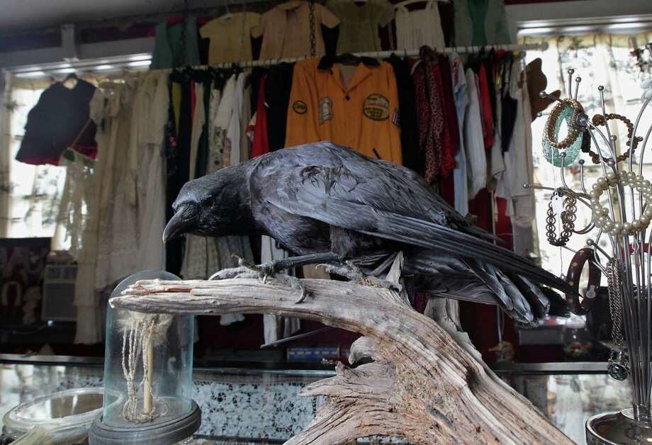 A taxidermy crow, above, keeps an eye on things. The collection of objects date from the 1950s and earlier. Photo: James Nielsen, Staff / © 2013  Houston Chronicle