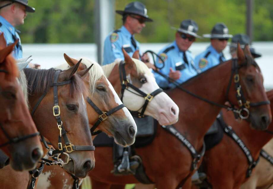 """All the HPD horse line up to witness """"Smash's""""  pinning during his graduation at HPD Mounted Patrol on Wednesday, Sept. 18, 2013, in Houston. Special needs girls handed a $10,000 check to the Houston Police Foundation to sponsor """"Smash"""" for two years, and girls plan to continue to fundraise money for the deaf horse. Photo: Mayra Beltran, Houston Chronicle / © 2013 Houston Chronicle"""