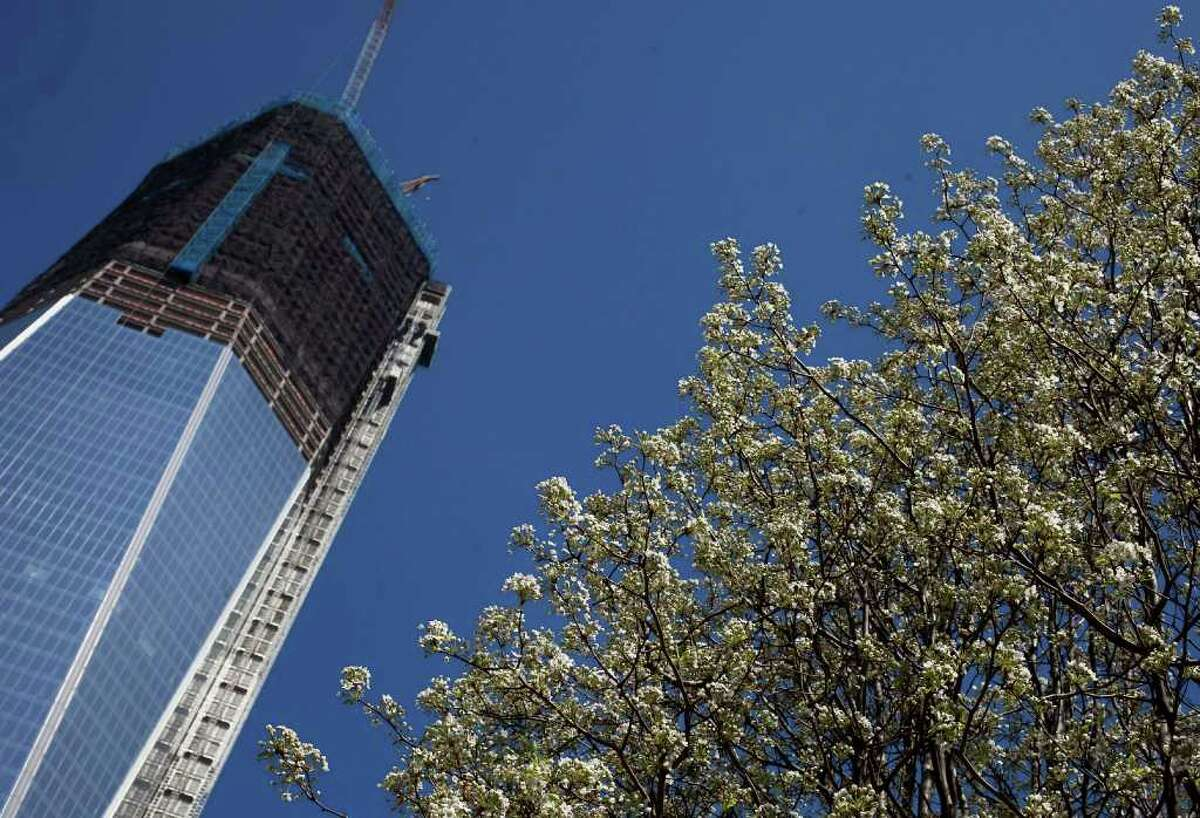 The Survivor Tree blossoms, Tuesday, March 20, 2012 at the World Trade Center in New York. One World Trade Center, left, now up to the 93rd floor, is scheduled for completion in 2013. The callery pear, salvaged from the rubble following the attacks of September 11, 2001, was nursed back to health and replanted at the National September 11 Memorial.