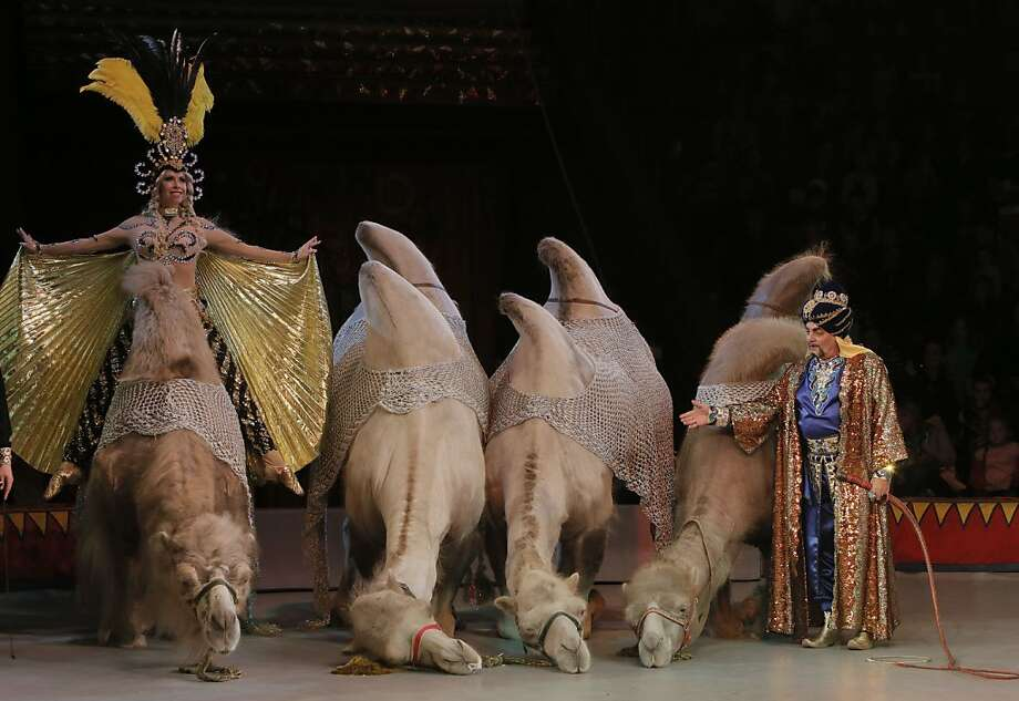 Two humps means what again? Circus artists Galyna and Alahverdy Israfilov, right, performs with camels during the opening concert in the new program in Ukraine's National Circus in Kiev. Photo: Efrem Lukatsky, Associated Press