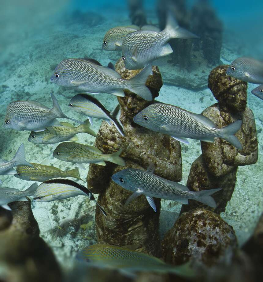 Fish swim through one of the underwater galleries. Photo: Jason De Caires Taylor