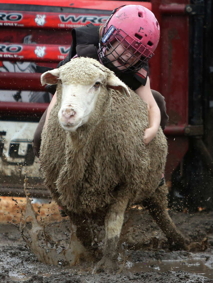 A young participant rides a sheep in the Wool Riders Only mutton busting competition during the 2013 Washington State Fair in Puyallup. The Washington State Fair, formerly known as the Puyallup Fair, has drawn large crowds each day since it opened on Sept. 6. The Fair continues through Sunday, Sept. 22. Photo: JOSHUA TRUJILLO, SEATTLEPI.COM / SEATTLEPI.COM