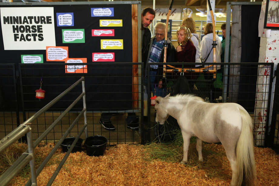 A display of miniature horses is shown during the 2013 Washington State Fair in Puyallup. The Washington State Fair, formerly known as the Puyallup Fair, has drawn large crowds each day since it opened on Sept. 6. The Fair continues through Sunday, Sept. 22. Photo: JOSHUA TRUJILLO, SEATTLEPI.COM / SEATTLEPI.COM