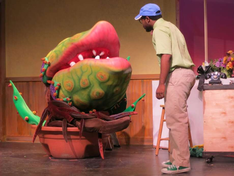 "A cute little plant grows up to be the monstrous, man-eating Audrey II in the musical ""Little Shop of Horrors,"" which is being produced by the Bridgeport (Conn.) Theatre Company through Sept. 28, 2013. Garth West stars as the hapless flower shop worker, Seymour, who is responsible for the scary mutation. Photo: Contributed Photo"