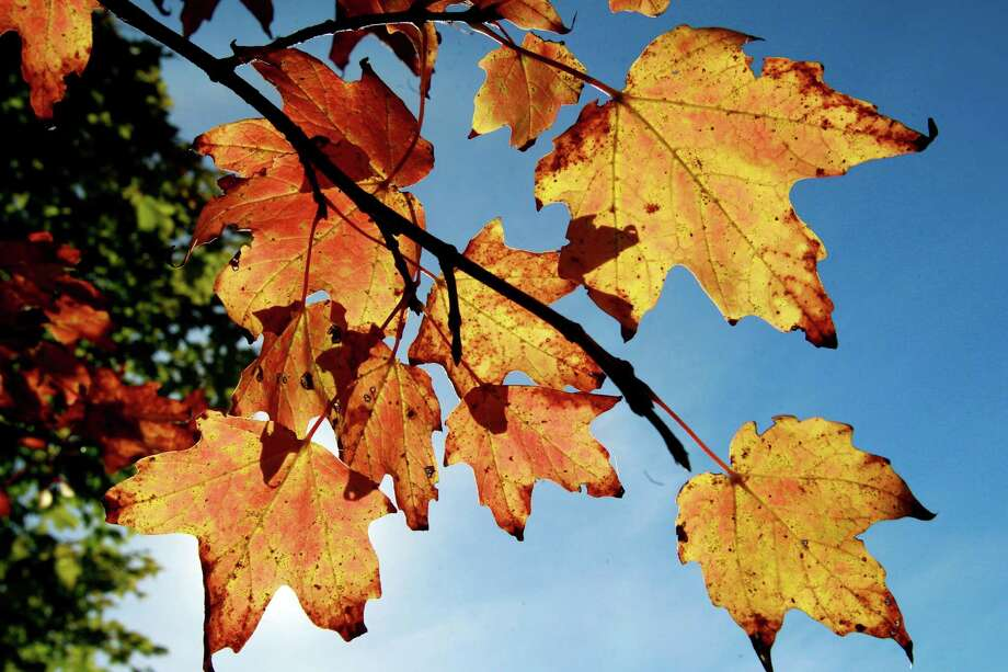 Peak leaf peeping: The first day of fall arrives on Sunday. Photo: Associated Press