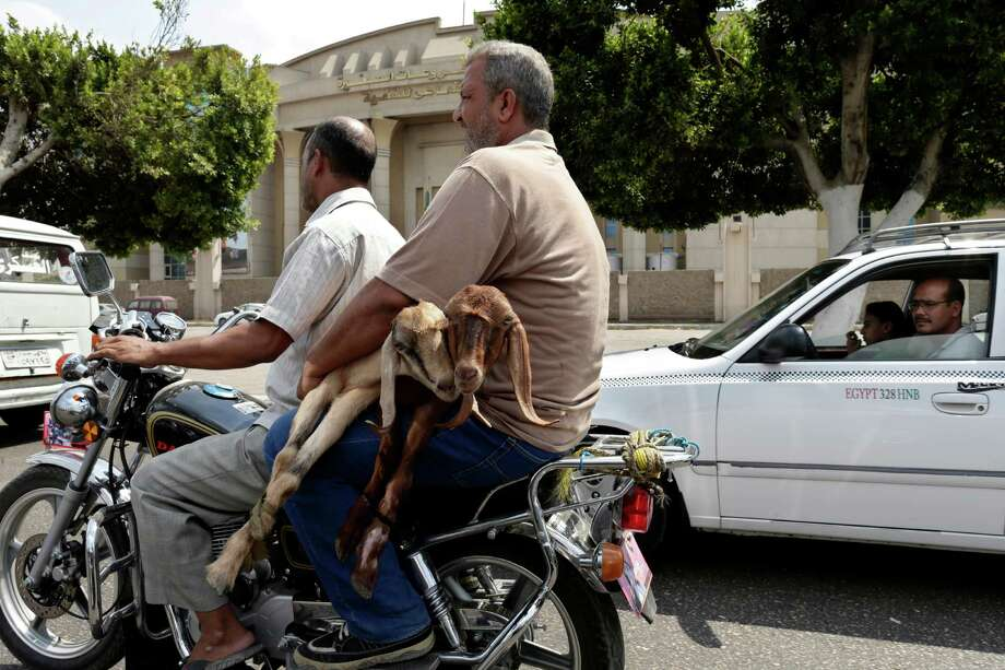 Goat is my copilot: Egyptian men transport goats on a motorcycle in Cairo, Egypt. Photo: Associated Press