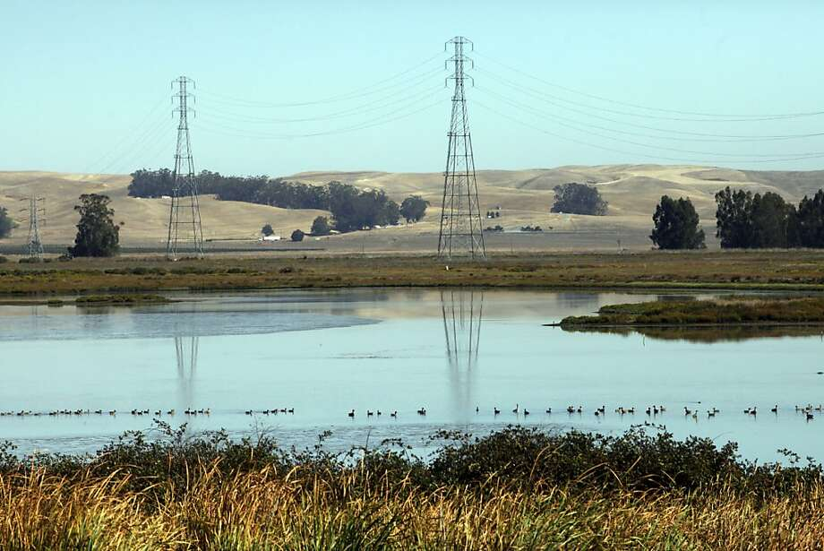 Ducks, geese and shorebirds are plentiful at Rush Creek Open Space Preserve near Novato. Photo: Lacy Atkins, The Chronicle