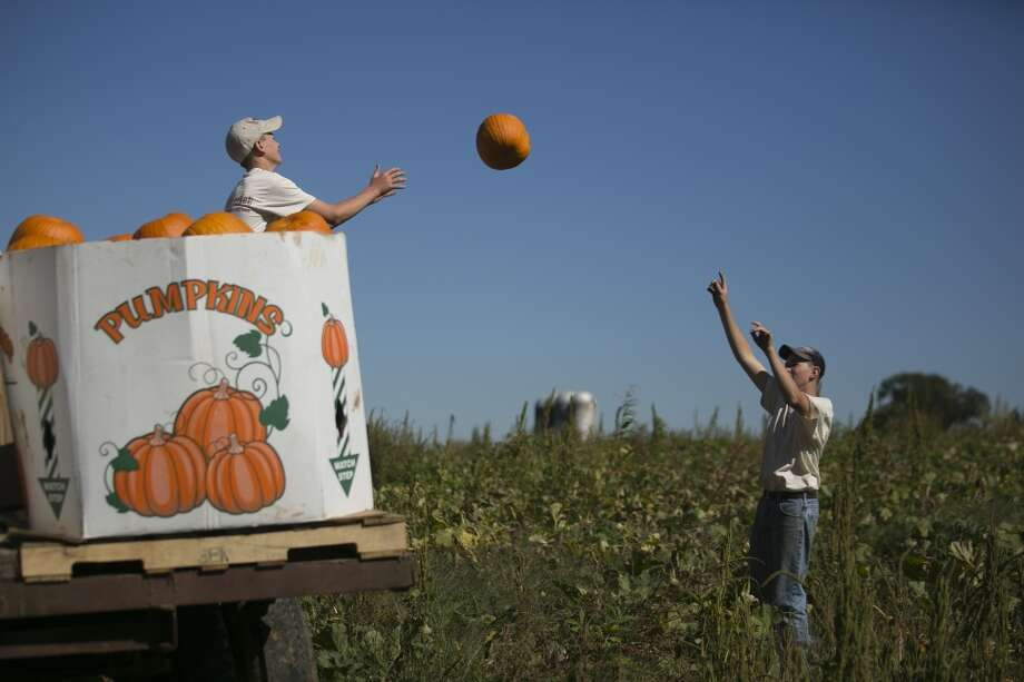 Virginia: Farmers Luke Miller, right, and Zachary Miller load carving pumpkins into a truck during a harvest at Miller Farms in Locust Grove, Virginia. Three-quarters of U.S. pumpkins are carved for decoration during the Oct. 31 Halloween festival. About one-quarter of the U.S. crop are light brown pumpkins without ribs that are canned or used in pie filling. Photo: Andrew Harrer, Bloomberg