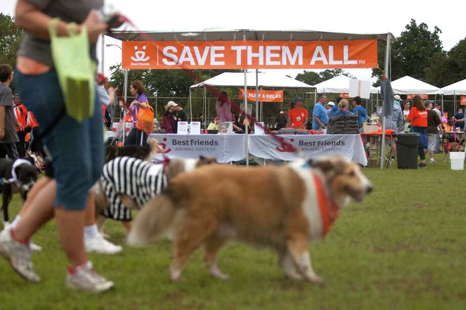 The donations raised through Strut Your Mutt will be used to fund lifesaving adoption programs and spay/neuter services, to ultimately impact the number of pets entering and leaving the shelters. For more information visit: www.strutyourmutt.org. Photo: Johnny Hanson, Houston Chronicle / Houston Chronicle