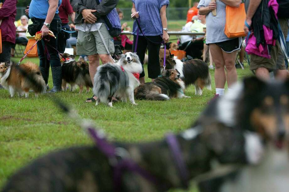 Hundreds of dogs and their owners gather at T.C. Jester Park during the Best Friends Animal Society Strut Your Mutt walk and fundraiser Saturday, Sept. 21, 2013, in Houston. Photo: Johnny Hanson, Houston Chronicle / Houston Chronicle