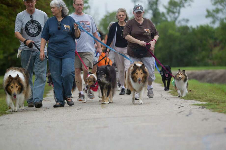 Hundreds of dogs and their owners walked around T.C. Jester Park during the Best Friends Animal Society Strut Your Mutt walk and fundraiser Saturday, Sept. 21, 2013, in Houston. Photo: Johnny Hanson, Houston Chronicle / Houston Chronicle