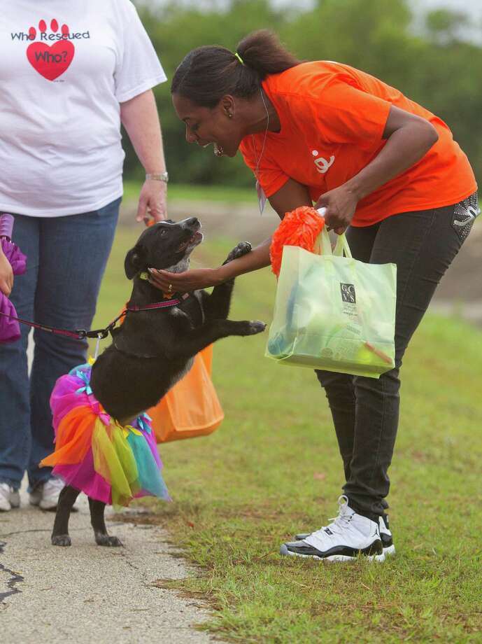 Niki Sims is greeted by the mixed-dog Callie who was walking for Corridor Rescue. Photo: Johnny Hanson, Houston Chronicle / Houston Chronicle