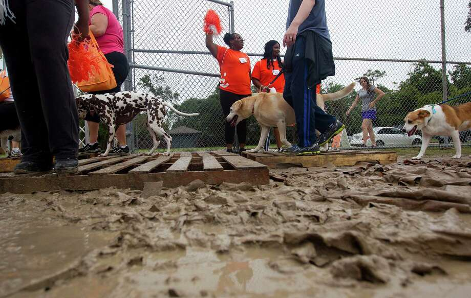 Trying to keep clean, dogs and their owners walk through the mud after walking  around T.C. Jester Park. Photo: Johnny Hanson, Houston Chronicle / Houston Chronicle