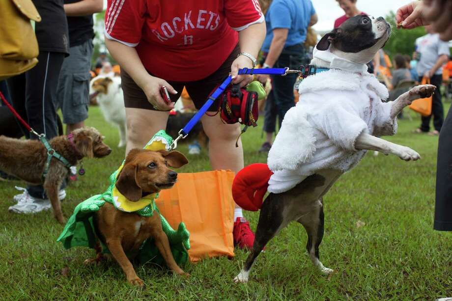 Dressed as a chicken, Harley reaches for a treat next to Franky, who was dressed as an alligator. Photo: Johnny Hanson, Houston Chronicle / Houston Chronicle