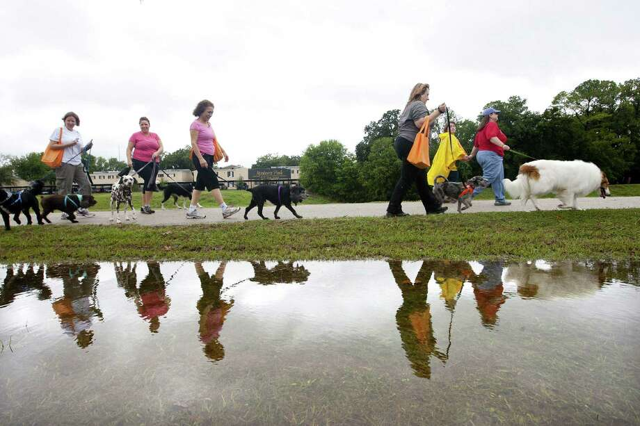 Hundreds of dogs and their owners walk around T.C. Jester Park in Houston during the Best Friends Animal Society Strut Your Mutt fundraiser Saturday. Rainfall had lowered the temperature. Photo: Johnny Hanson / Houston Chronicle