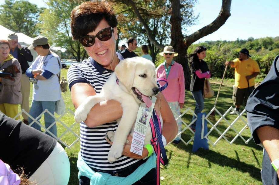 Kate McNamara, of Greenwich, holds Soleil, a Labrador retriever 11-weeks-old, during the Puppy Love competition at Adopt-A-Dog's 26th annual Puttin' on the Dog festival at Roger Sherman Baldwin Park, in Greenwich, Conn., Sunday, Sept. 22, 2013. Photo: Helen Neafsey / Greenwich Time