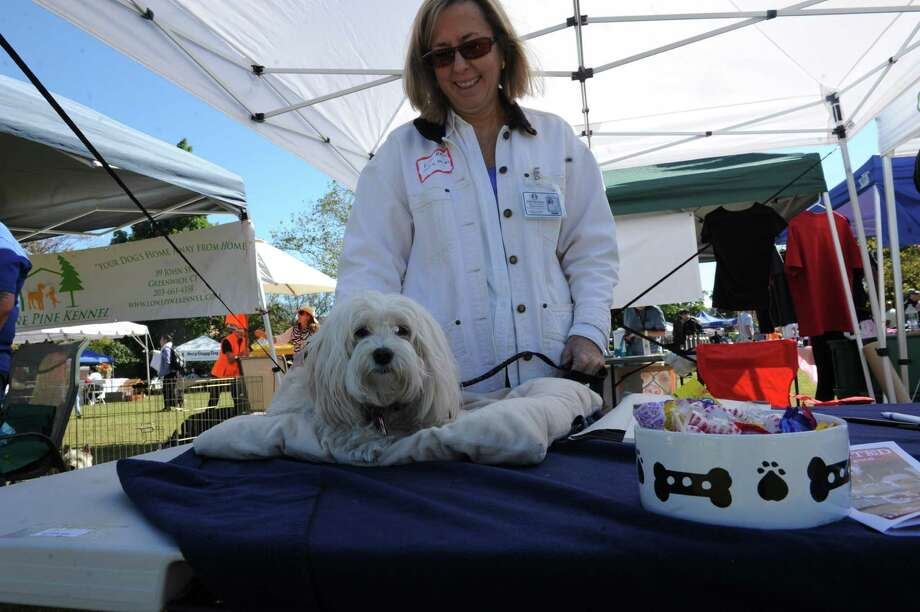 Adopt-A-Dog's 26th annual Puttin' on the Dog festival turned a lovely day at Roger Sherman Baldwin Park, in Greenwich, Conn., Sunday, Sept. 22, 2013. Photo: Helen Neafsey / Greenwich Time