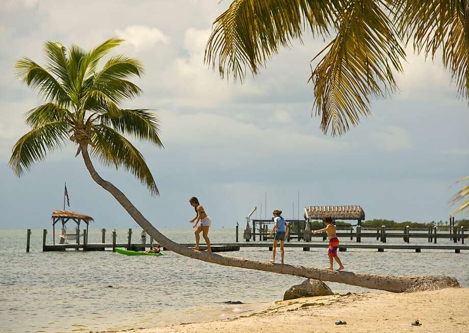 In this Saturday, Sept. 21, 2013, photo provided by the Florida Keys News Bureau, children play on a palm tree at The Moorings Village resort in Islamorada, Fla. Growing above the Atlantic Ocean, the curved tree has become one of several photographic icons in the Florida Keys. (AP Photo/Florida Keys News Bureau, Andy Newman) Photo: Andy Newman, Associated Press