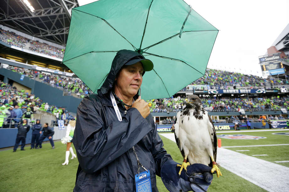David Knutson holds Taima the Hawk under an umbrella during in the first half of an NFL football game between the Seattle Seahawks and the Jacksonville Jaguars, Sunday, Sept. 22, 2013, in Seattle. Photo: Ted S. Warren, AP / AP