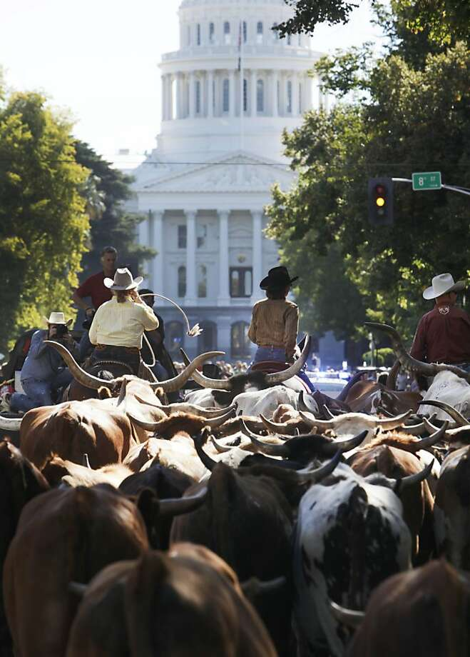 "Bovine traffic jam: Cowboys drive a herd of cattle down Capitol Mall past state office buildings toward the State Capitol in Sacramento, Calif., on Monday, Sept. 23, 2013. The cattle drive is part of Sacramento's week long ""Farm-to-Fork"" festival promoting the use of local farm fresh goods in regional restaurants and at home. Photo: Steve Yeater, Associated Press"