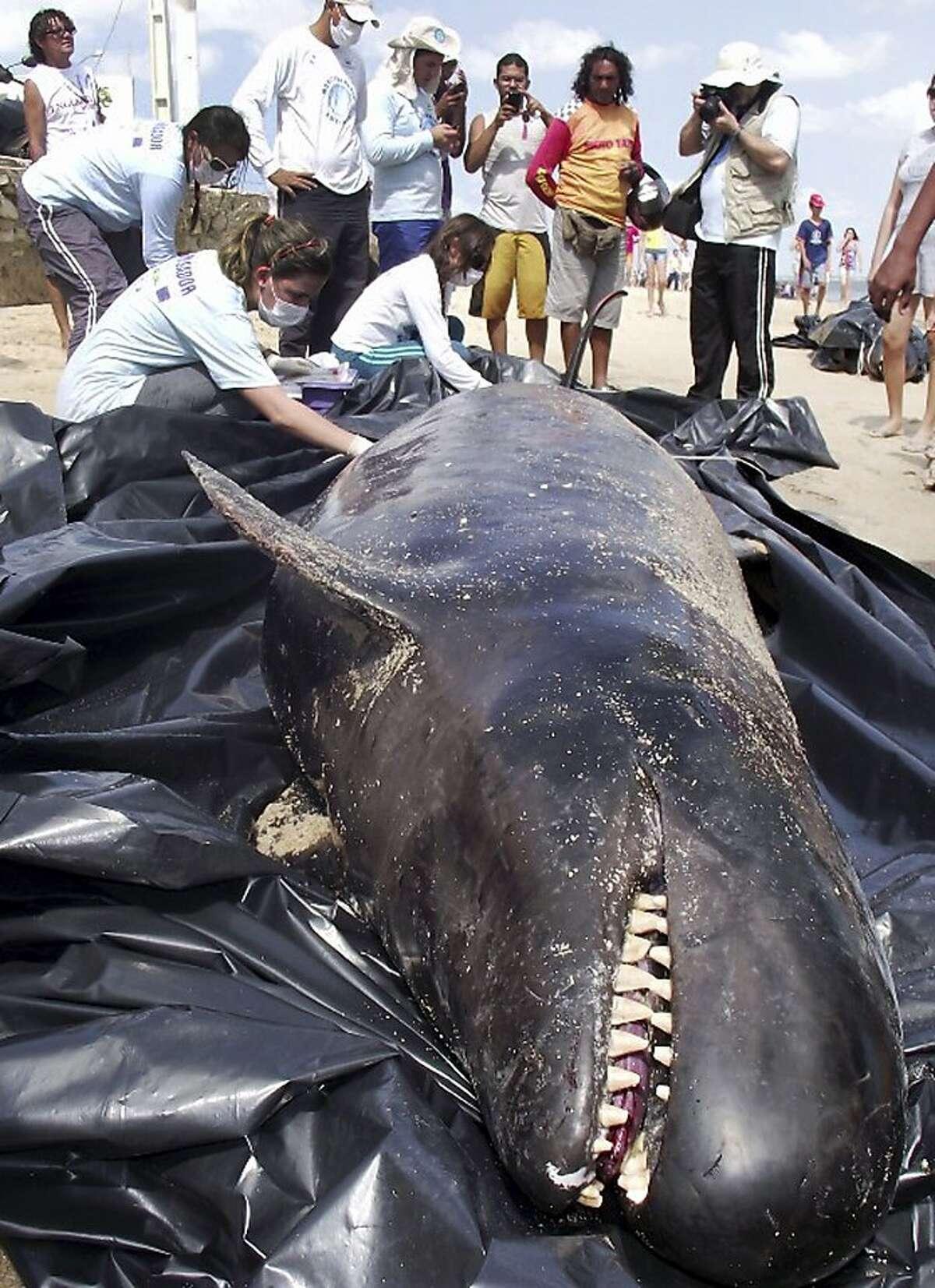 I said, 'eaaaaaaaasy big fella': Biologists inspect a dead dolphin on Upanema beach in the Areia Branca municipality of Rio Grande do Norte state, Brazil.